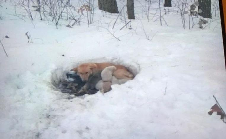 Photo of Mamahood and six pups survive as by miracle in bitter cold