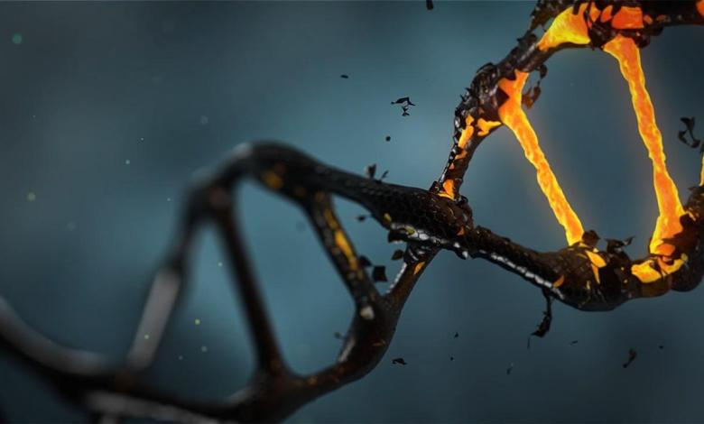 Photo of Experts discover 'tools' to restore DNA