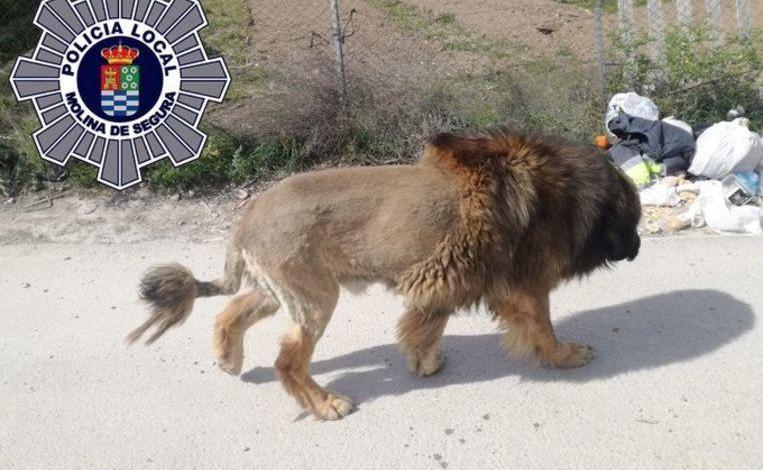 Photo of Free-roaming lion in Spain turns out to be a dog