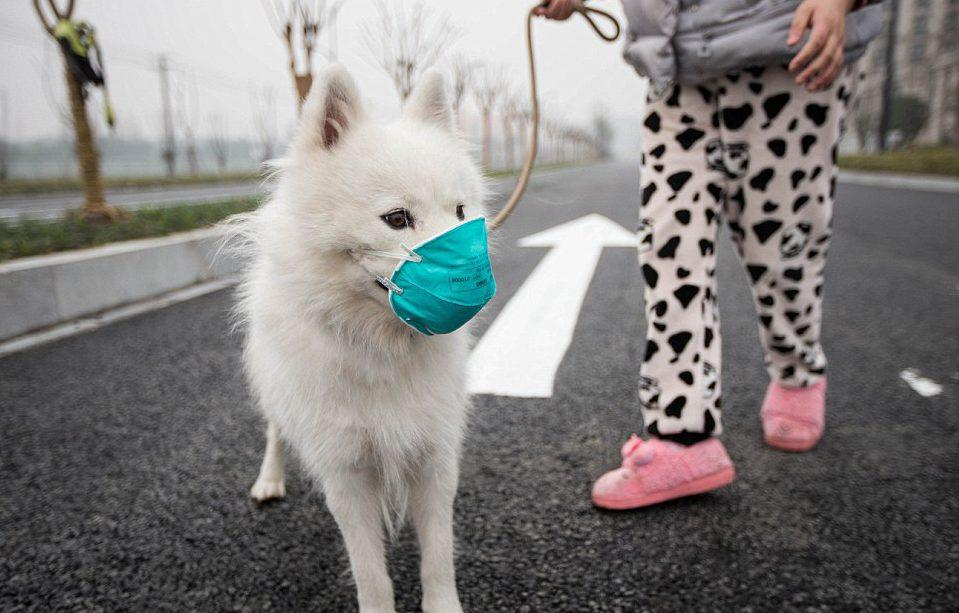 First dog with coronavirus in Hong Kong in quarantine