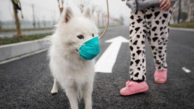 Photo of First dog with coronavirus in Hong Kong in quarantine
