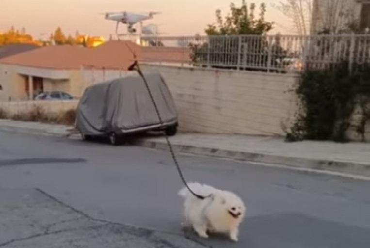Quarantine owner walks dog with a remote-controlled drone