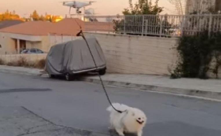 Photo of Quarantine owner walks dog with a remote-controlled drone