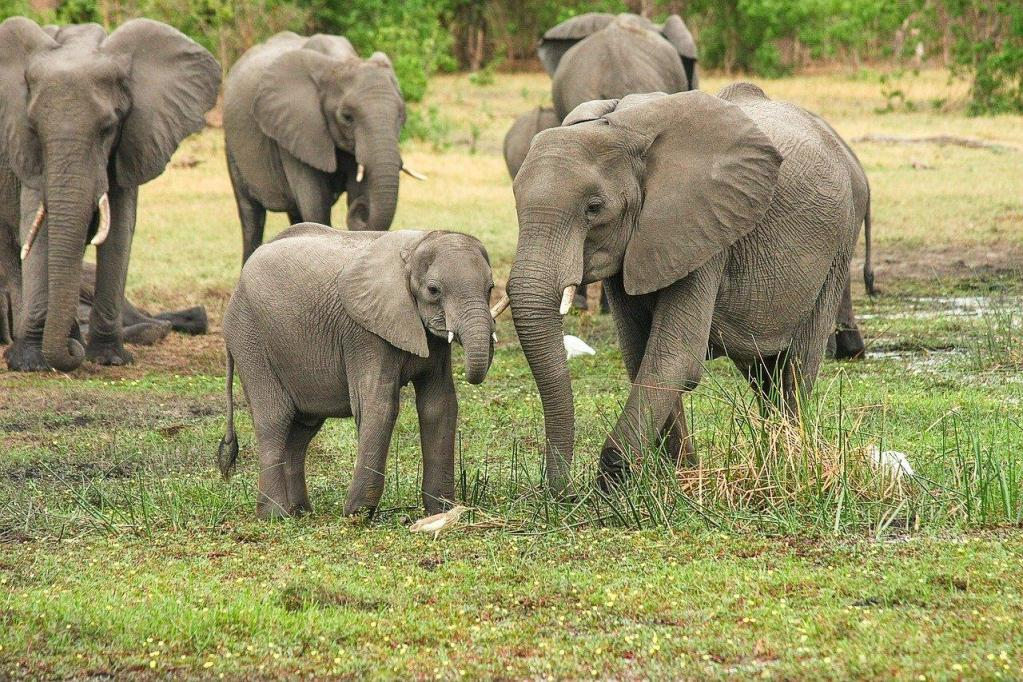 A herd of elephants in South Luangwa National Park in Zambia