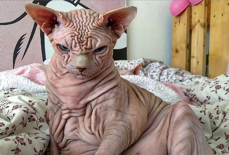 """""""He doesn't hurt a fly"""": Extremely wrinkly and 'cranky' cat"""