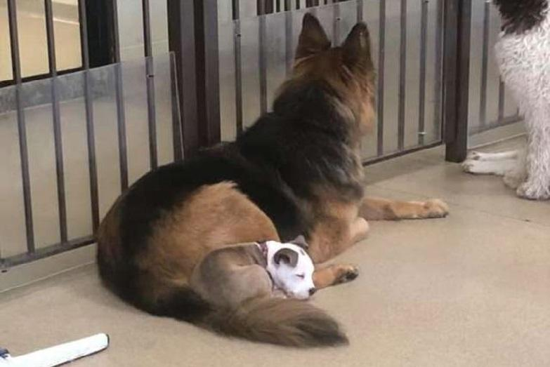 This Dog picks out the softest four-legged friend every day for naps