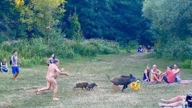 Photo of Naked swimmer chases wild boar that runs off with his laptop