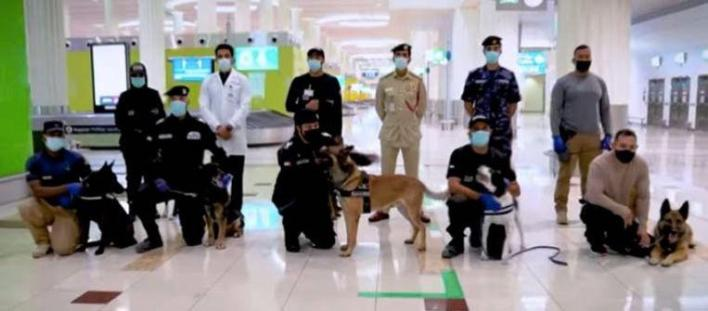 These dogs are active at Dubai Airport, but the country also wants to use dogs in police patrols, shopping centers or events.