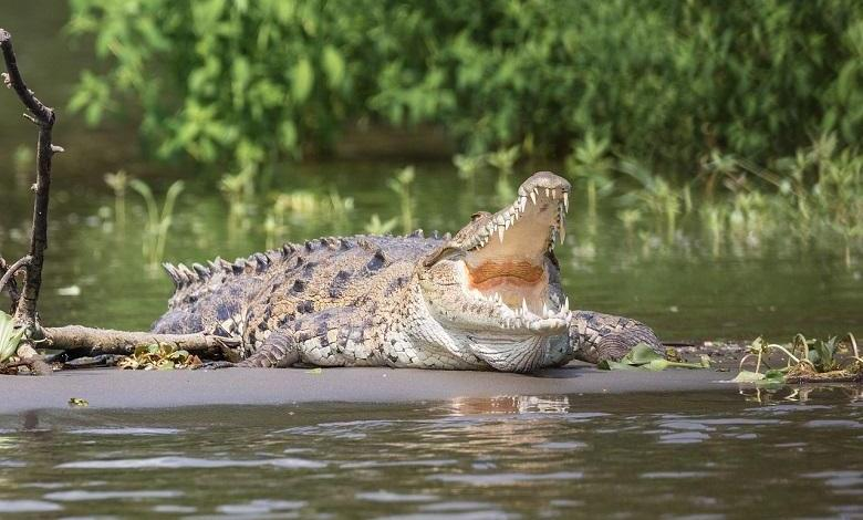 Photo of Crocodile kills a boy that swims directly to his jaw: Priest advised him after performing rituals