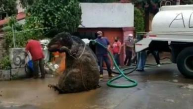 Photo of 'Giant rat' discovered in Mexico City sewer