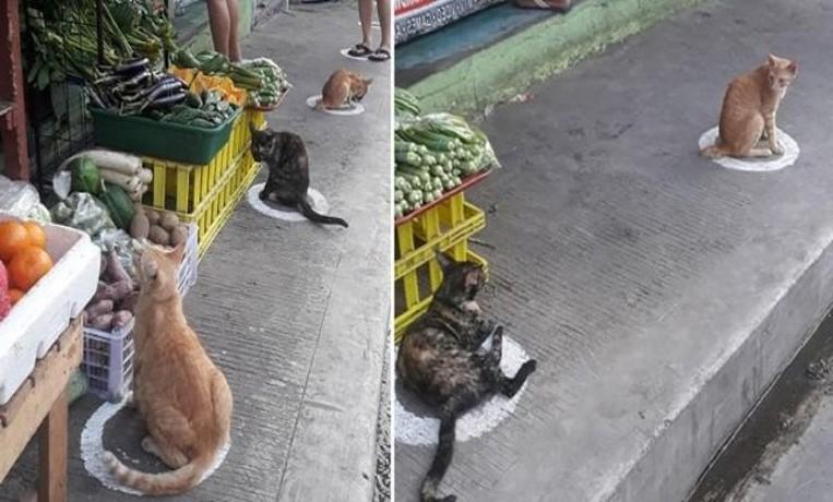 Photo of Cats set a good example: this is how you do social distancing
