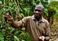 Robert Buule, one of the most prominent coffee farmers in Uganda and across Africa. He has been doing coffee farming for over 20 years. Robert started coffee farming on 8 acres of land that he inherited and from the income generated from the 8 acres he bought 30 more acres which he does coffee farming on. He is also the Executive Director of Nsangi Coffee Farmers- Photo by Maurice Oniang'o