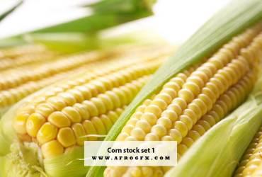 Corn stock set 1
