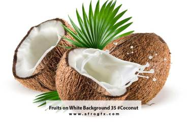 Fruits on White Background 35 #Coconut