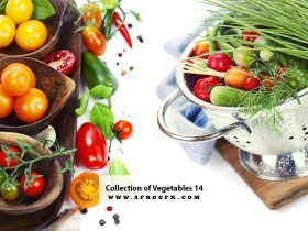 Collection of Vegetables 14