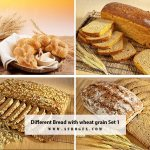 Different Bread with wheat grain Set 1