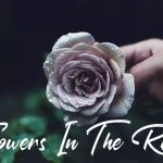Flowers In The Rain - No Copyright Audio Library