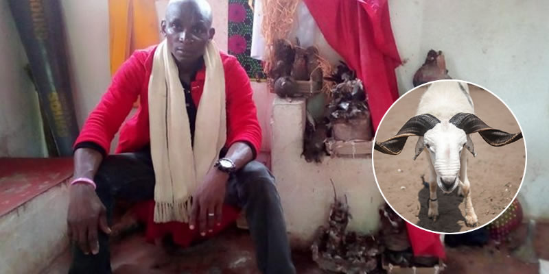 Drama in Anambra as man steal head of Ram sacrificed to Deity