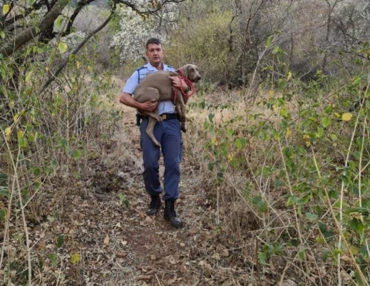 Dog trapped in mountain saved by Hartbeespoort colonel