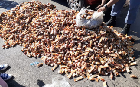 Alleged poachers found with R6m crayfish to appear in court