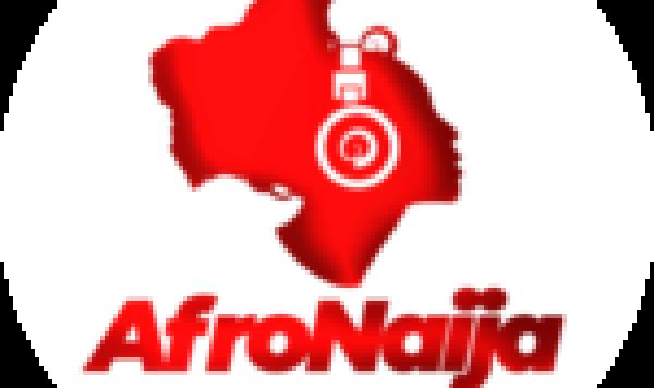 6 incredible health benefits of Juniper berries