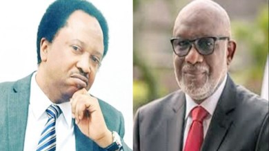 Shehu Sani to Governor Akeredolu: Outrightly wrong to ask all cattle herders to leave Ondo forests