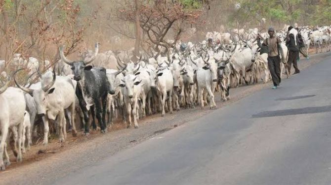 Quit notice: Buhari govt emotionally attached to Fulani herdsmen – Ondo govt fires back at presidency