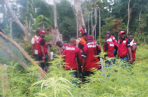 NDLEA has destroyed thousands of cannabis farms, 18 meth labs, says Marwa