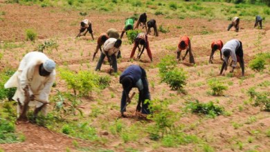 How Taraba community mobilised, rescued 15 kidnapped farmers