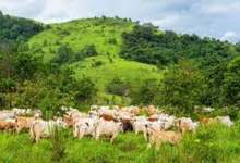 ACF backs southern governors' decision, calls for end of open grazing