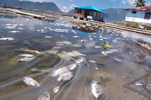 Limbah Pabrik dapat menyebabkan rusaknya ekosistem