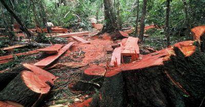 Penebangan Pohon di Hutan
