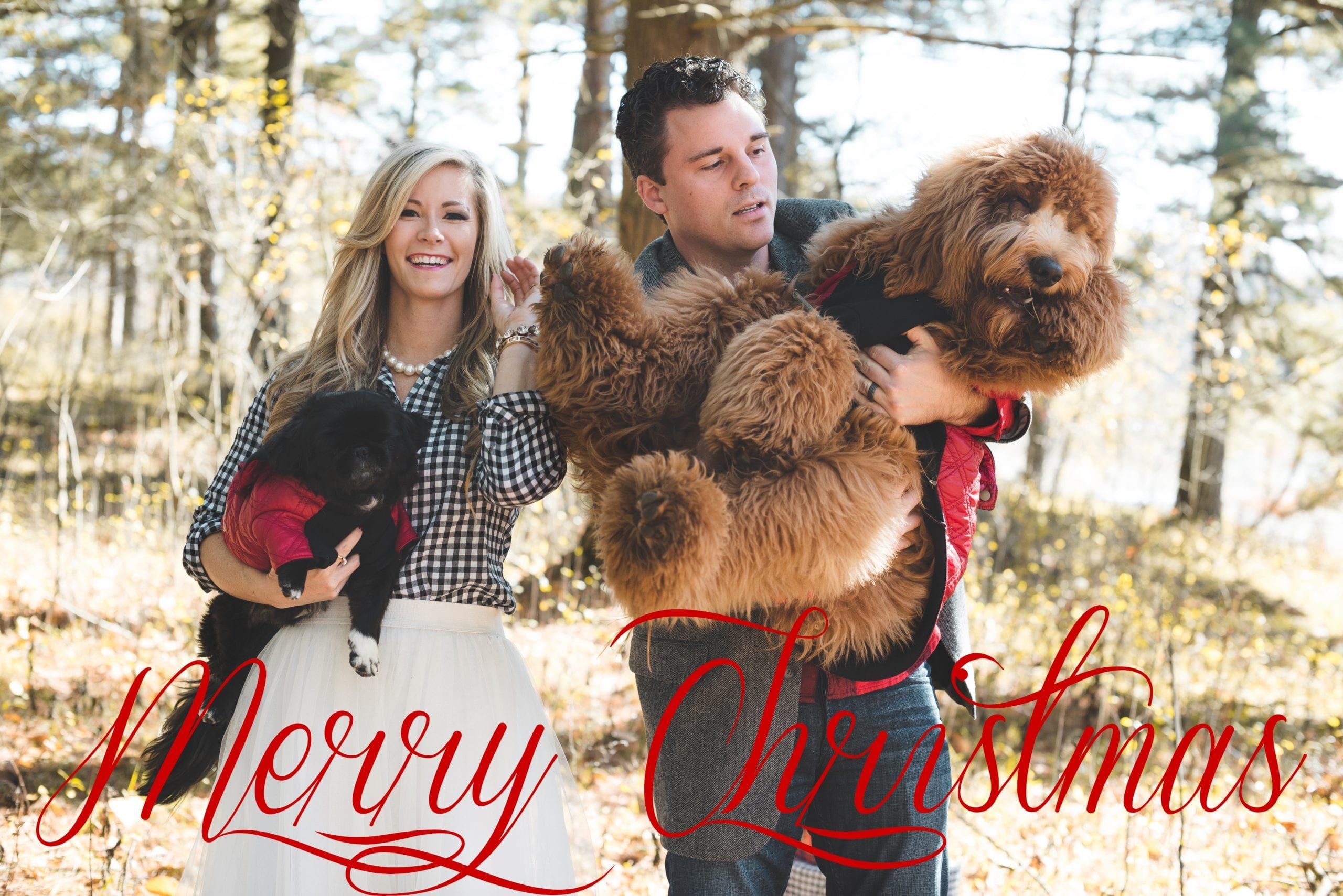 Christmas Card-Family Photo-Holiday-Dogs copy - Afternoon Espresso