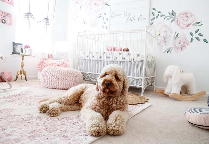 Goldendoodle- Girl Nursery - Nursery Decoration