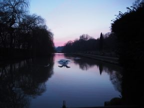 Coombe Pool Swan