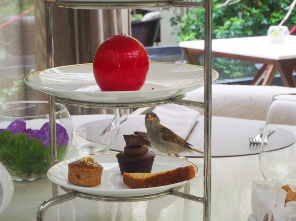 A sparrow guest / Un moineau qui s'invite