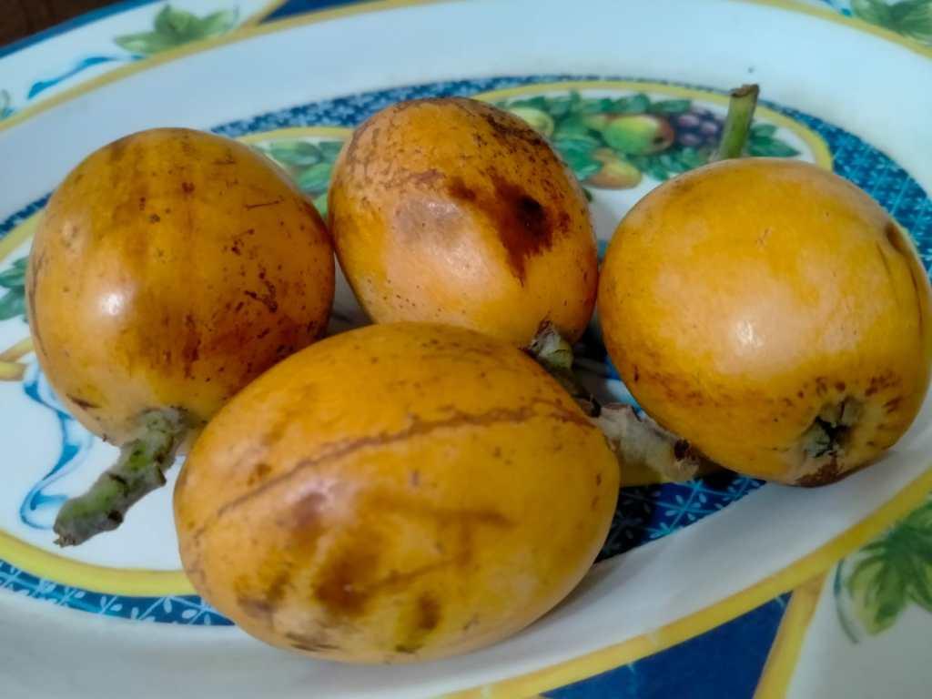 nespole frutto