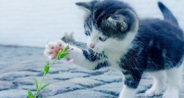 στείρωσης αδέσποτων γάτων