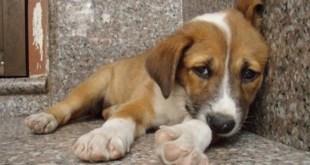 Εκδηλώσεις για την παγκόσμια ημέρα των ζώων στο Γκάζι