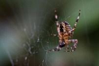49 Saskia Otto Spider.jpeg