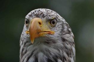61 Joop Rijndorp Bird 3