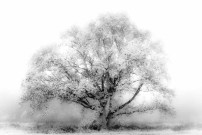 88 Teus Renes Solitaire tree