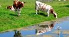 11 FVDM 150909 (20) Henk Schoot