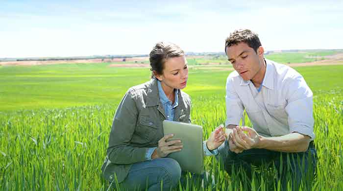 two ag employees looking at field