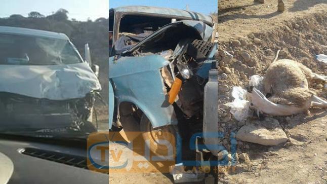 """أكادير: مقتل سائق """"ترانزيت"""" في حادثة اصطدام 3 سيارات محملة بالأغنام"""