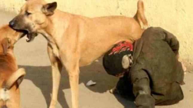 الداخلية تكشف حقيقة صورة متشرد يشرب الحليب من ثدي كلبة بتيزنيت