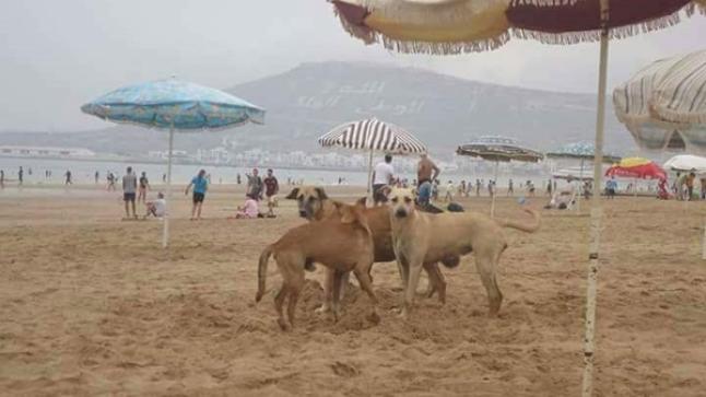 الكلاب تلتهم 50 مليون من ميزانية جماعة أكادير