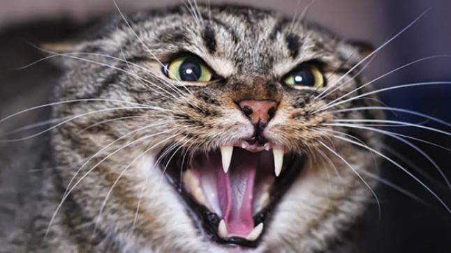 عضة قطة تقتل طفلا بمدينة تارودانت
