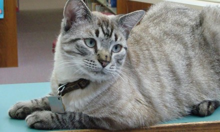 ATG Quirkies: The Library Cat With Nine Lives