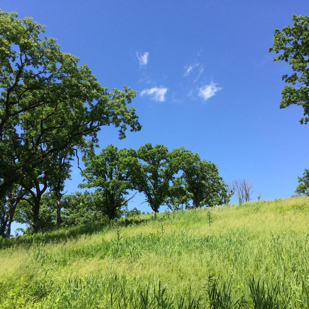 Restored oak savanna, Belwin Conservancy